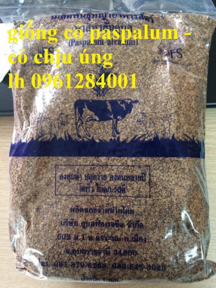 Giống cỏ VA06, hom giống VA06, cỏ ghi nê, cỏ sả, cỏ sữa, số lượng lớn, giao hàng toàn quốc14