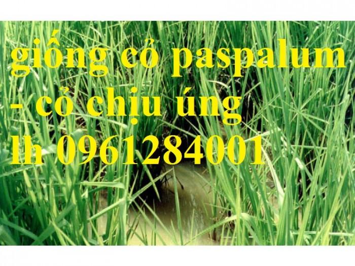 Giống cỏ VA06, hom giống VA06, cỏ ghi nê, cỏ sả, cỏ sữa, số lượng lớn, giao hàng toàn quốc11
