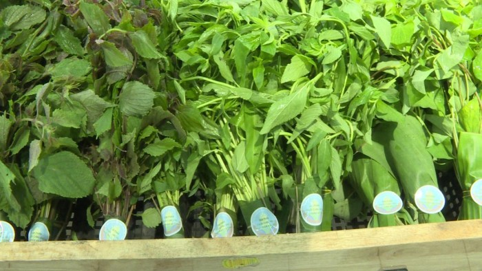 Bán lá chuối tươi, bán lá chuối sạch, cung cấp lá chuối, lá chuối sạch 0901 070 0807