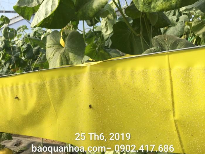 Keo bẫy côn trùng nông nghiệp Israel, combo 20 mét, màu vàng 2 mặt8