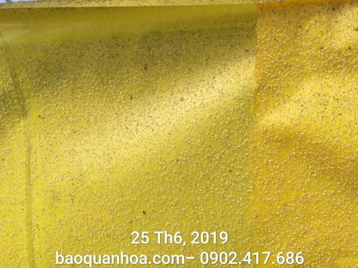 Keo bẫy côn trùng nông nghiệp Israel, combo 20 mét, màu vàng 2 mặt6