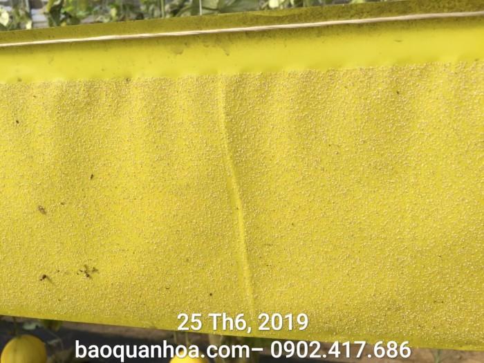 Keo bẫy côn trùng nông nghiệp Israel, combo 20 mét, màu vàng 2 mặt5