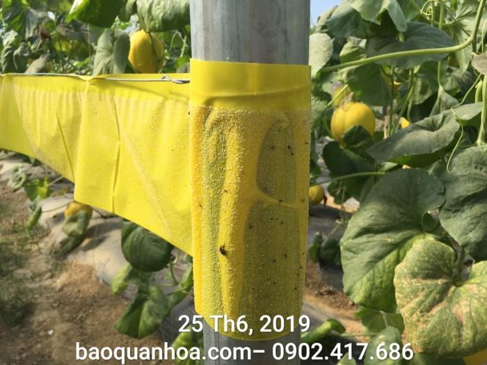 Keo bẫy côn trùng nông nghiệp Israel, combo 20 mét, màu vàng 2 mặt4