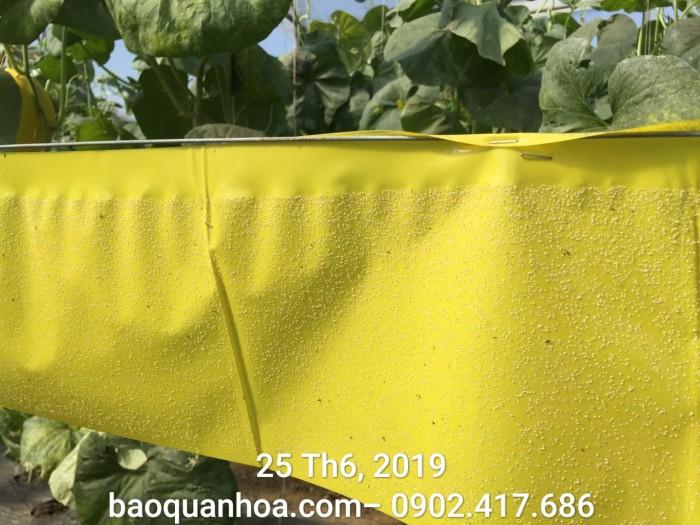 Keo bẫy côn trùng nông nghiệp Israel, combo 20 mét, màu vàng 2 mặt7