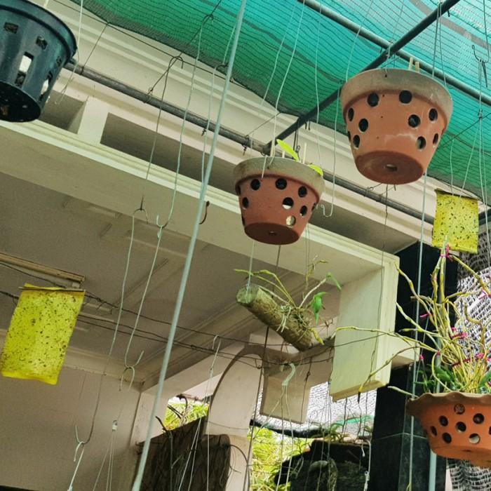 Keo Bẫy Ruồi Đục Sinh Học Israel (Combo 10 mét) và Bẫy bọ phấn trắng, bọ nhảy5