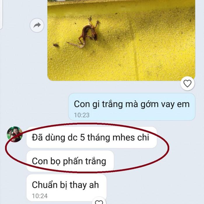 Keo Bẫy Ruồi Đục Sinh Học Israel (Combo 10 mét) và Bẫy bọ phấn trắng, bọ nhảy7