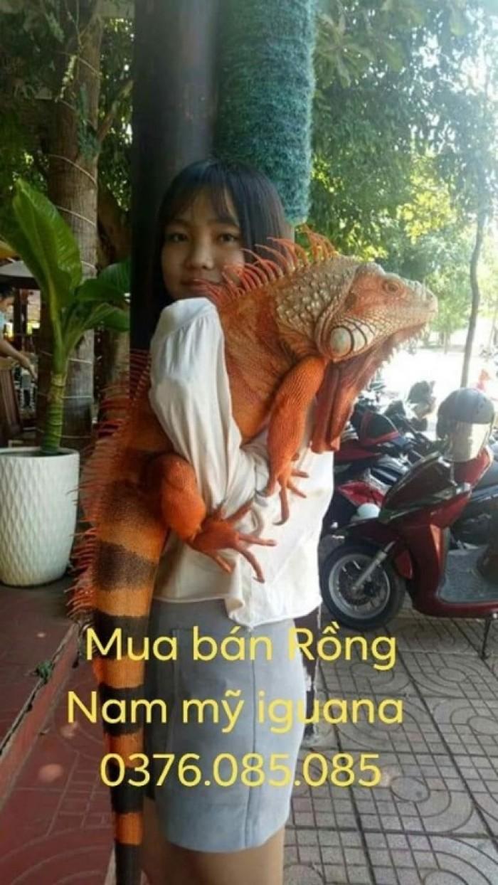 red iguana size lớn0