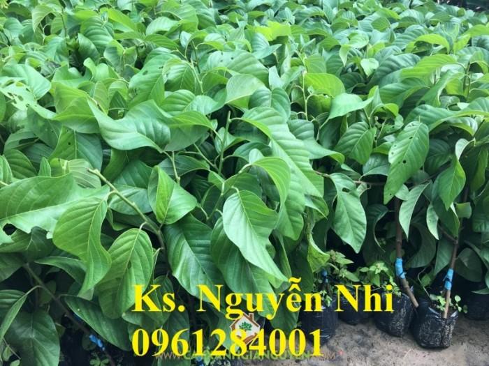 Chuyên cung cấp cây giống na Thái Lan, cam kết chất lượng, giao cây toàn quốc.13