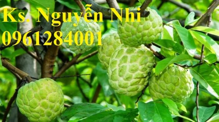 Chuyên cung cấp cây giống na Thái Lan, cam kết chất lượng, giao cây toàn quốc.7