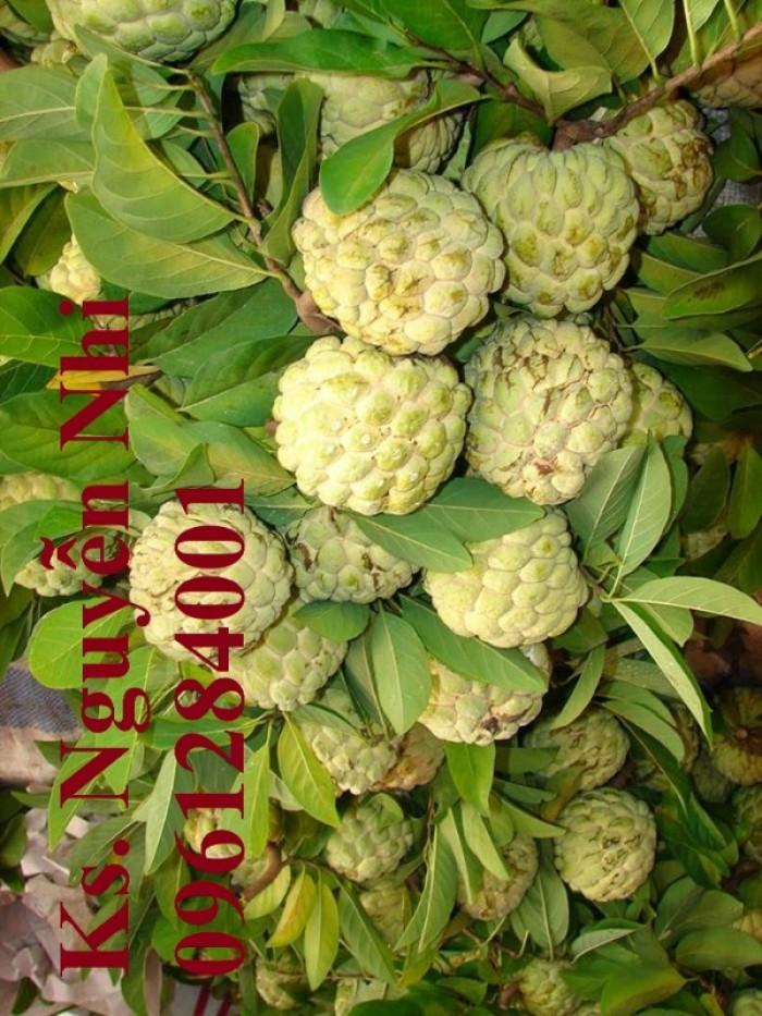 Chuyên cung cấp cây giống na Thái Lan, cam kết chất lượng, giao cây toàn quốc.14