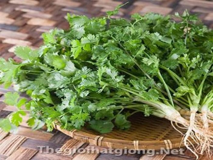 Hạt rau giống bó xôi chịu nhiệt, diếp thơm, húng quế, mầm cải đỏ, cải trắng, mầm đậu Hà Lan, mùi cồn tía, rau muống lá tre, tía tô6