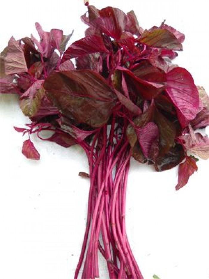 Cung cấp hạt giống rau dền3