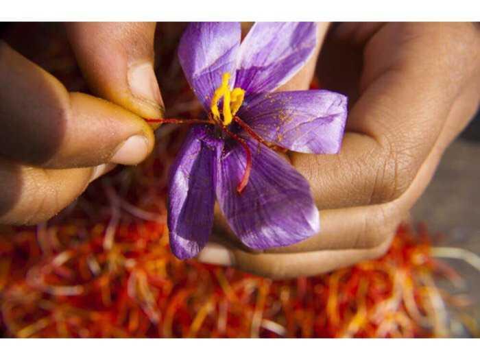 Nhụy hoa nghệ tây Saffron2