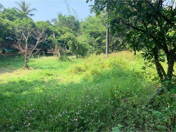 Bán gấp 2411 mv đất vườn nhãn đất cao không ngập nước láng giềng hiền lành