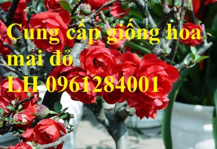 Cung cấp số lượng lớn hoa mai đỏ, hoa mai đỏ chơi Tết, hoa đào đỏ, giao hàng toàn quốc8