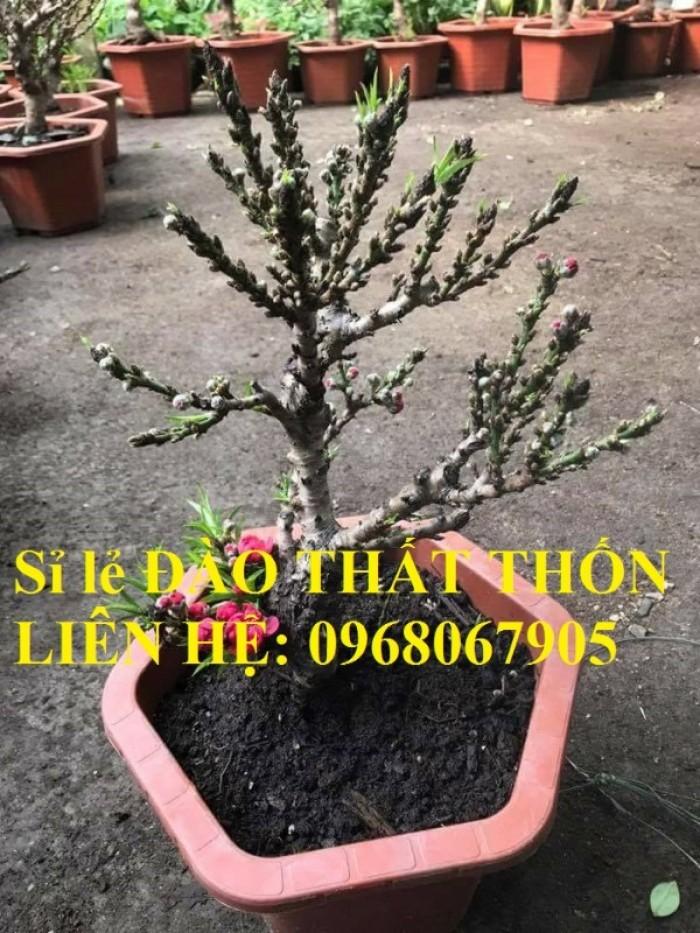 Sỉ - lẻ Đào Thất Thốn dáng bonsai cực chất - Liên hệ: 09680679056