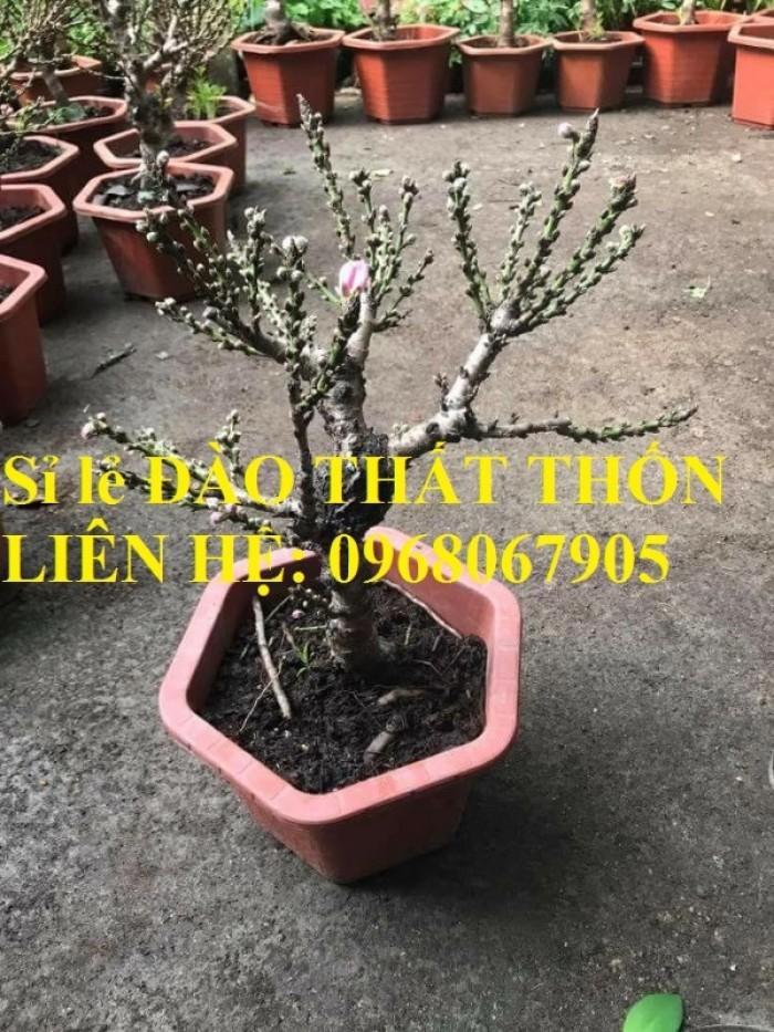 Sỉ - lẻ Đào Thất Thốn dáng bonsai cực chất - Liên hệ: 096806790512