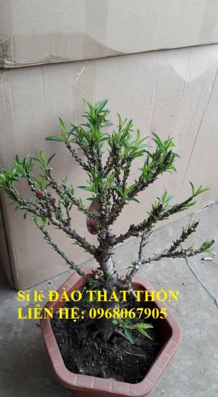 Sỉ - lẻ Đào Thất Thốn dáng bonsai cực chất - Liên hệ: 096806790515