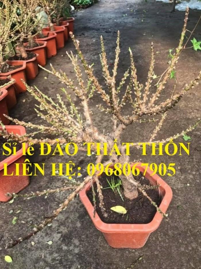 Sỉ - lẻ Đào Thất Thốn dáng bonsai cực chất - Liên hệ: 096806790510