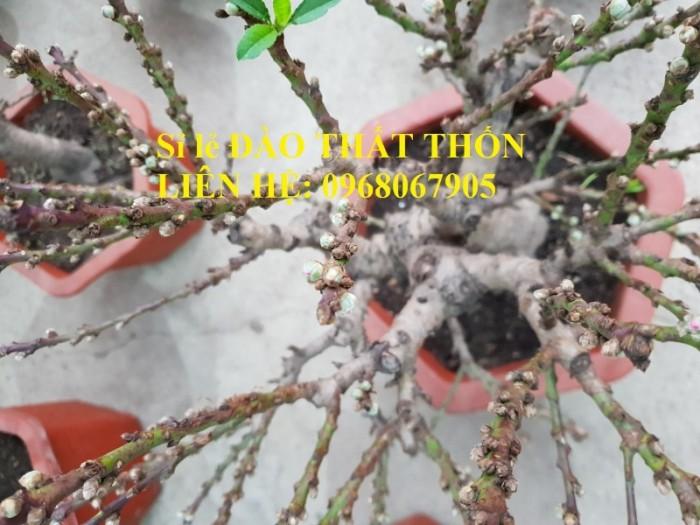 Sỉ - lẻ Đào Thất Thốn dáng bonsai cực chất - Liên hệ: 09680679051