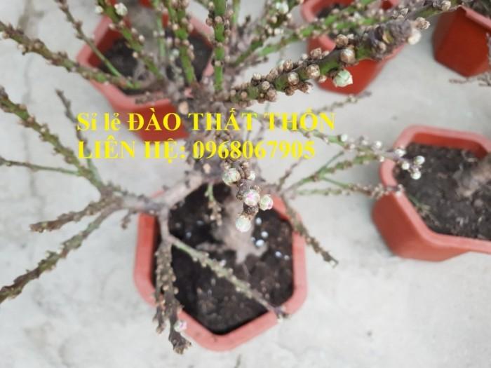 Sỉ - lẻ Đào Thất Thốn dáng bonsai cực chất - Liên hệ: 09680679050