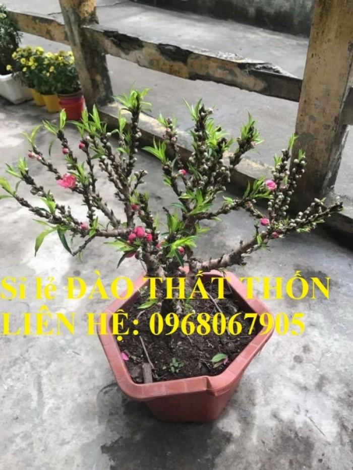 Sỉ - lẻ Đào Thất Thốn dáng bonsai cực chất - Liên hệ: 096806790511