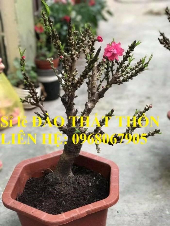 Sỉ - lẻ Đào Thất Thốn dáng bonsai cực chất - Liên hệ: 09680679059
