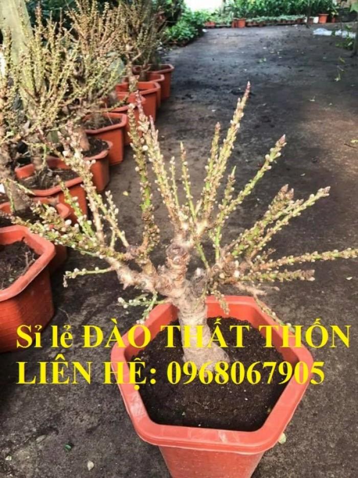 Sỉ - lẻ Đào Thất Thốn dáng bonsai cực chất - Liên hệ: 09680679055
