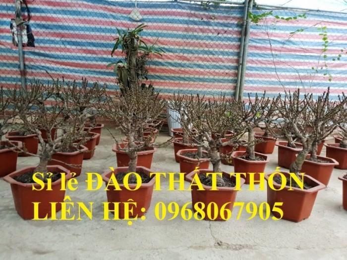 Sỉ - lẻ Đào Thất Thốn dáng bonsai cực chất - Liên hệ: 09680679053