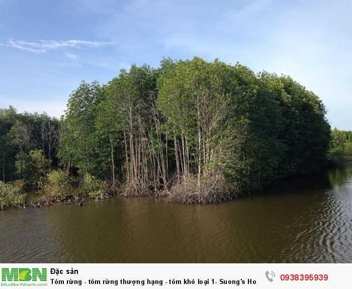 Mua đuôi tôm rừng khô thượng hạng - Đặc sản từ rừng ngập mặn Cà Mau • Điện thoại : 0938 395 9392