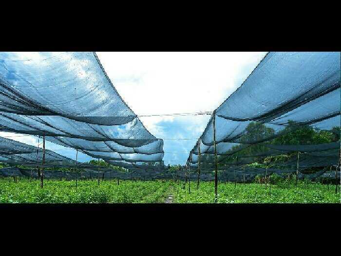 Lưới che nắng cao cấp thái lan0