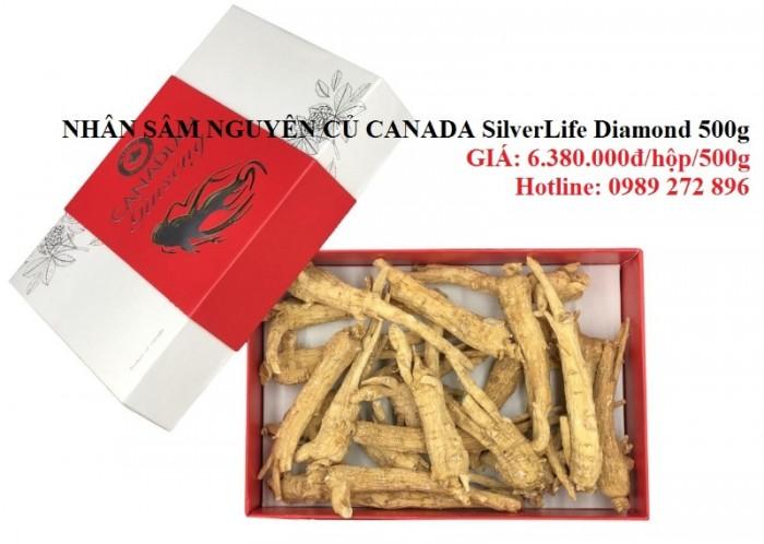 Nhân sâm nguyên củ Canada SilverLife Diamond 500g - Món quà quý cho sức khỏe0