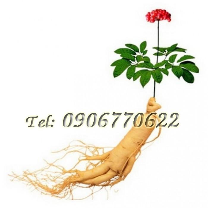 Hạt giống nhân sâm Hàn Quốc – Bịch 10 hạt0