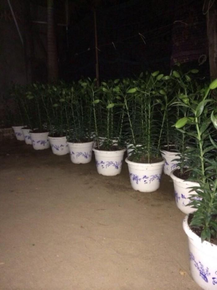 Chậu nhựa trồng cây - Chậu hoa nhựa Thakico