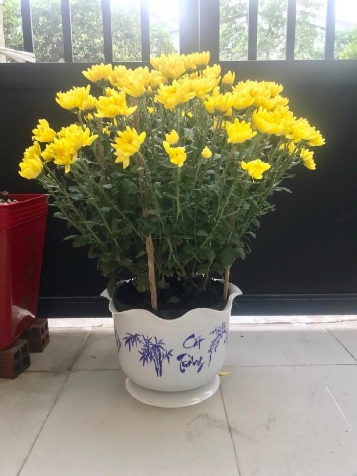 Chậu hoa nhựa Thakico Sản Xuất Chậu Nhựa giả sứ in bông Như Ý Cát Tường
