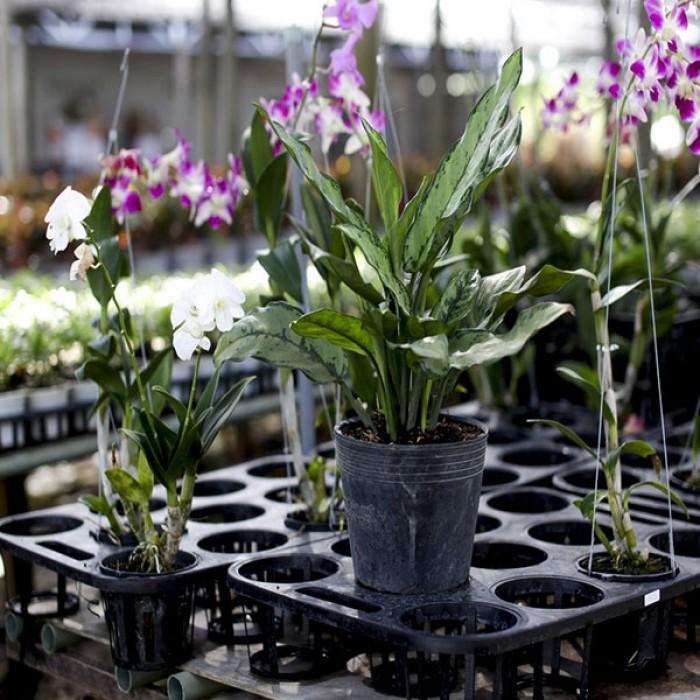Chậu nhựa treo - Chậu trồng hoa Thakico