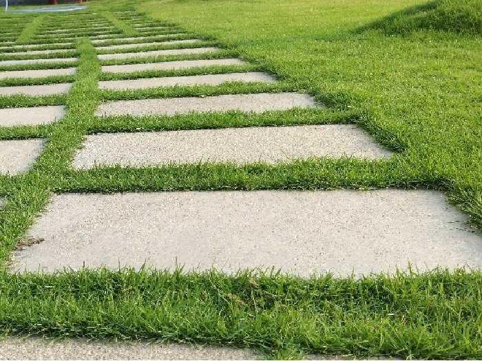Cỏ nhung Nhật trồng sân vườn lót đá1