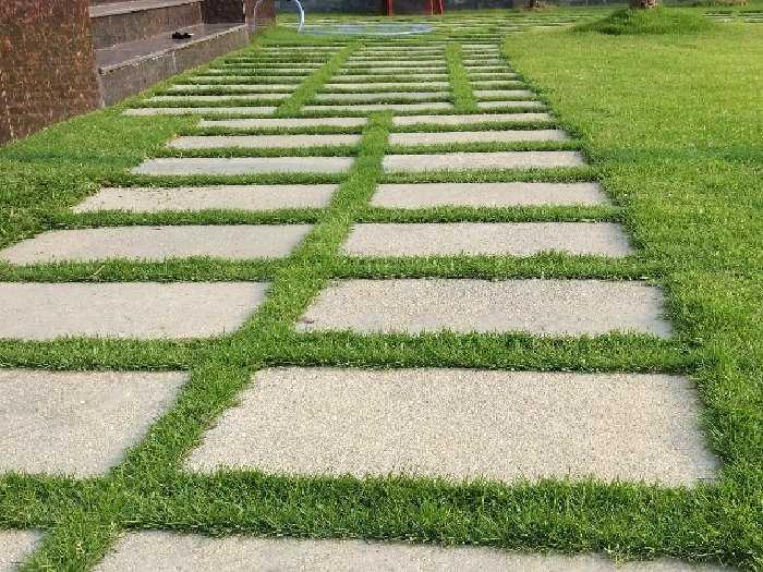 Cỏ nhung Nhật trồng sân vườn lót đá2