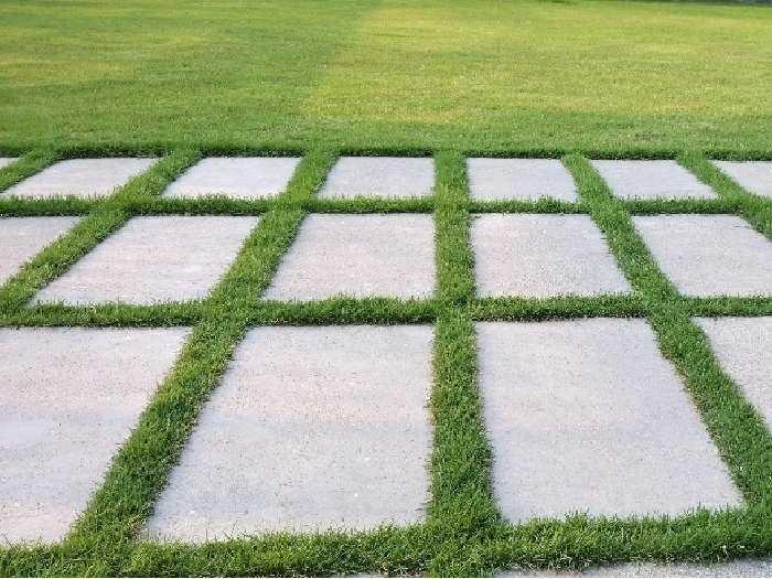 Cỏ nhung Nhật trồng sân vườn lót đá4