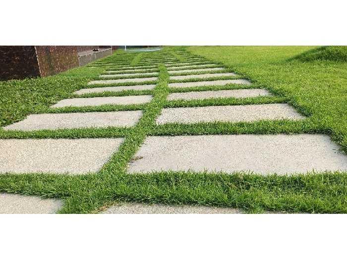 Trồng cỏ nhung Nhật sân vườn lót đá2
