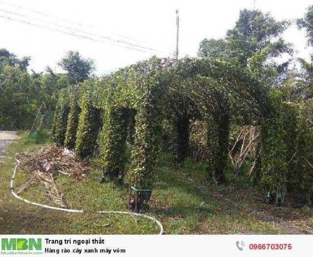 Hàng rào cây xanh máy vòm0
