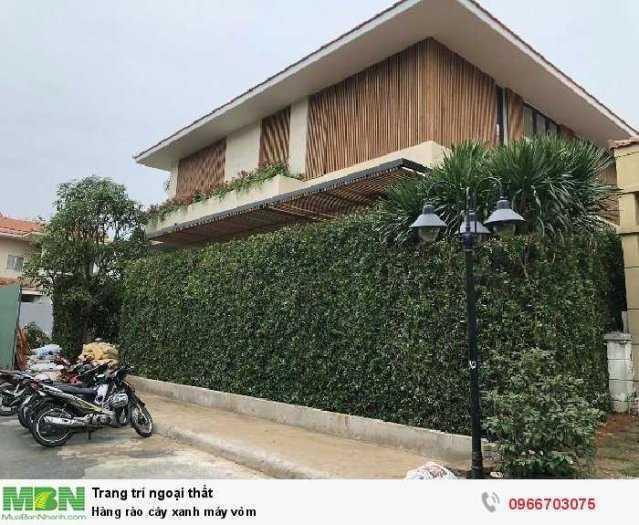 Hàng rào cây xanh máy vòm1