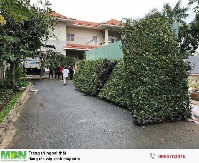 Hàng rào cây xanh máy vòm2