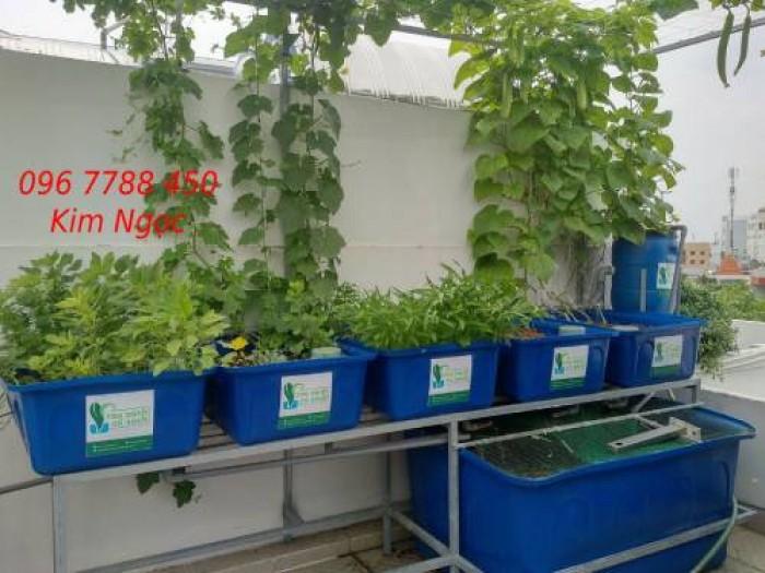 Hệ thống Aquaponics trồng rau hữu cơ giá rẻ0