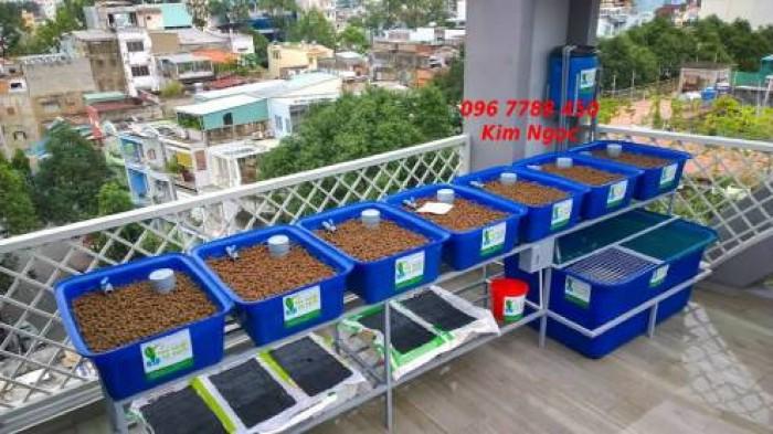 Hệ thống Aquaponics trồng rau hữu cơ giá rẻ1