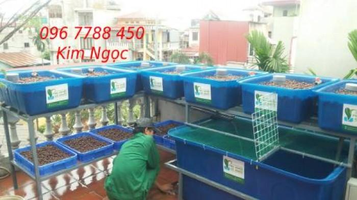 Hệ thống Aquaponics trồng rau hữu cơ giá rẻ2