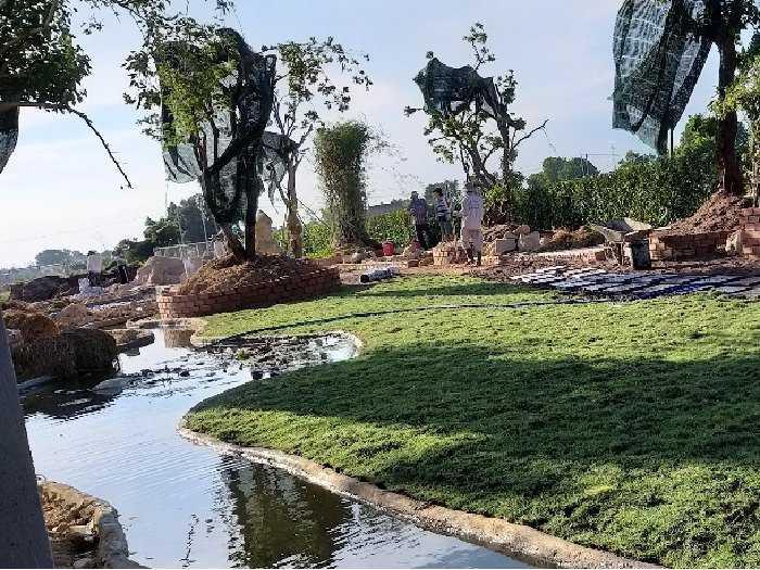Bán cỏ nhung Nhật trang trí cảnh quan1