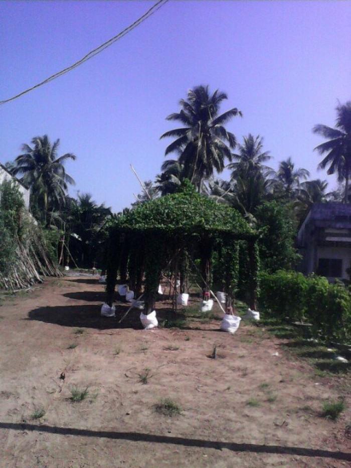 Chồi cây xanh ngôi nhà  xanh nhà vườn Đức Tiến Phát1