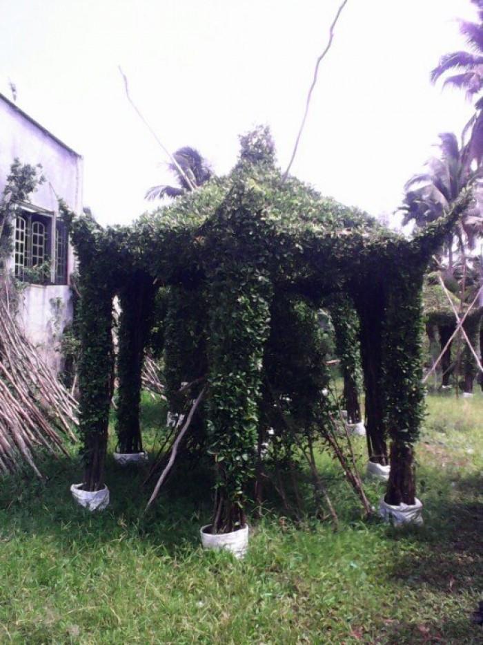 Chồi cây xanh ngôi nhà  xanh nhà vườn Đức Tiến Phát2