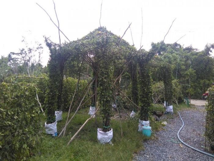Chồi cây xanh ngôi nhà  xanh nhà vườn Đức Tiến Phát5